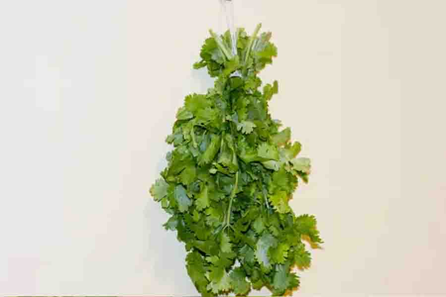 How to Dry Cilantro in your home